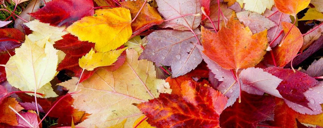 Leaves 5 1080x430
